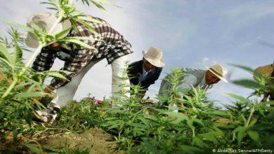 """صورة مدير اللجنة العالمية لسياسة المخدرات يؤكد أن مقاربة المغرب في تقنين """"الكيف"""" """"تتلاءم تماما مع القانون الدولي"""""""