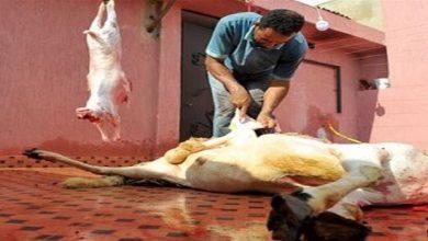 """صورة هل تفرض السلطات شروطا على """"جزّاري العيد"""" لتفادي ظهور بؤر وبائية؟"""